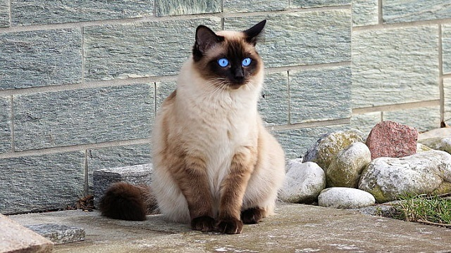 Hypoallergenic Cats – Do They Exist?
