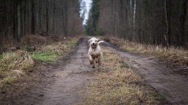 Off-leash Dogs: When To Do It And How To Proceed