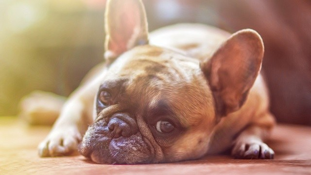 Coconut Oil for Dogs and Cats: Safe or Not?
