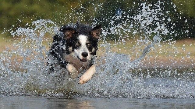 10 of the Smartest Dog Breeds
