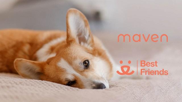 National Dog Day: Help Us Save Lives