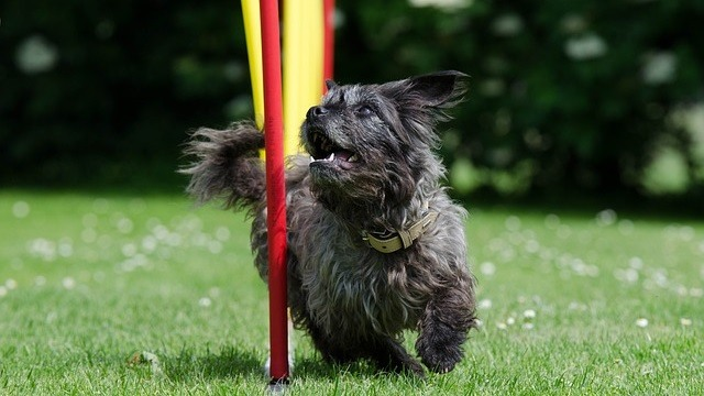 Agility Training for Dogs and Cats
