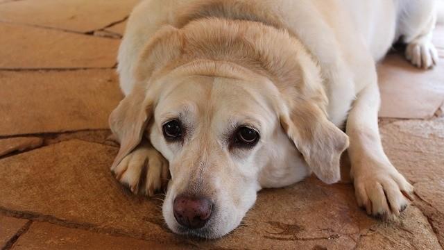 Pet Obesity Awareness